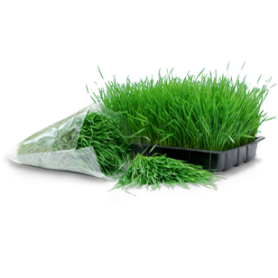 wheatgrass tray and bag